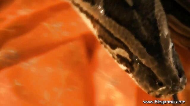 सेक्स कोई पंजीकरण  ग्रेहाउंड-बाइक ब्लू पिक्चर सेक्सी फुल मूवी